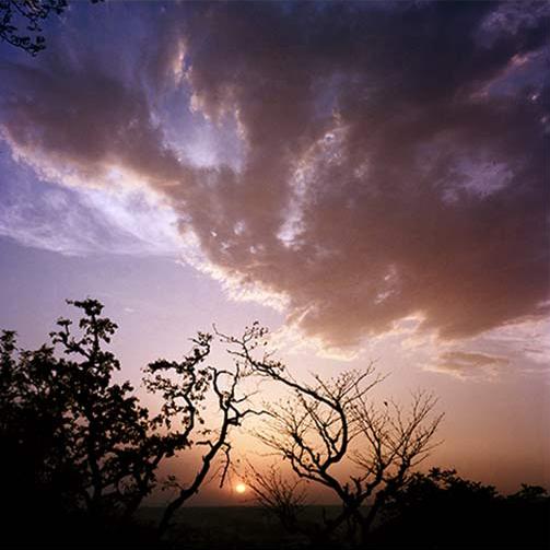 Raices y Nubes